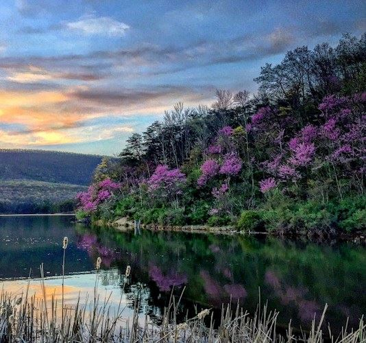 everlinkadventures-Redbuds-Spring-Allegany-County-MD